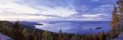 Trees Along a Lake, Lake Pielinen, Koli National Park, Lieksa, Finland
