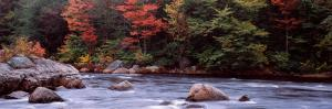 Trees Along a River, Moose River, Adirondack Mountains, New York State, USA