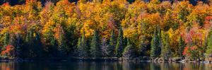 Trees at pondside, East Bolton, Quebec, Canada