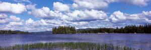 Trees at the Lakeside, Raquette Lake, Adirondack Mountains, New York State, USA