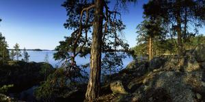 Trees at the Lakeside, Saimaa, Puumala, Southern Savonia, Eastern Finland, Finland