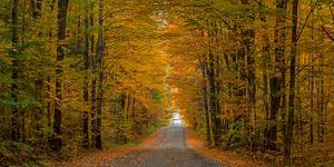 Trees both sides on a dirt road, Iron Hill, Quebec, Canada