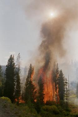 Trees Burning in Forest Fire