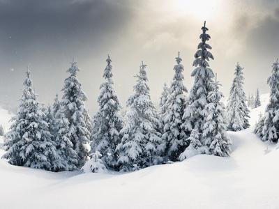 https://imgc.allpostersimages.com/img/posters/trees-covered-with-hoarfrost-and-snow-in-mountains_u-L-Q105IB20.jpg?artPerspective=n