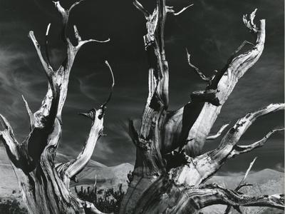 https://imgc.allpostersimages.com/img/posters/trees-high-serra-california-1978_u-L-Q1G6MO50.jpg?p=0