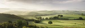 Trees in a Field, San Quirico D'Orcia, Val D'Orcia, Siena Province, Tuscany, Italy