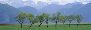 Trees in a Field with Mountain Range in the Background, Pyrenees, Spain