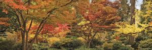 Trees in a Forest, Ashland, Jackson County, Oregon, USA
