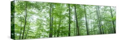 Trees in a Forest, Hamburg, New York State, USA