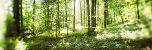 Trees in a Forest, Hudson Valley, New Jersey, USA
