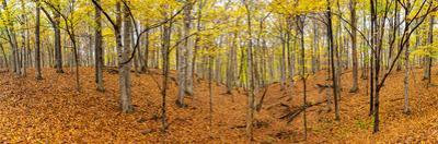 Trees in a forest, Stephen A. Forbes State Recreation Area, Marion County, Illinois, USA