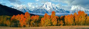 Trees in a Forest with Snowcapped Mountain Range in the Background, Teton Range, Oxbow Bend