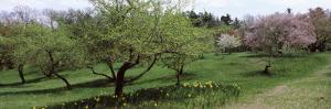 Trees in a Garden, Ellwanger Garden, Rochester, Monroe County, New York State, USA