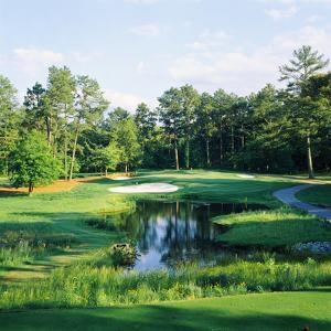 Trees in a Golf Course, Pine Needles Lodge and Golf Club, Pinehurst, Moore County