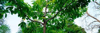 Trees in a park, Adams Park, Wheaton, Illinois, USA
