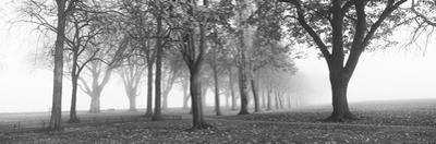 Trees in a Park During Fog, Wandsworth Park, Putney, London, England