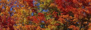 Trees in Adirondack Mountains, New York State, USA