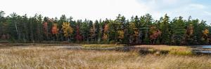 Trees in forest during autumn, Mount Desert Island, Acadia National Park, Hancock County, Maine...
