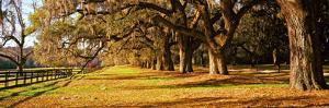 Trees in Garden, Boone Hall Plantation, Mount Pleasant, Charleston, South Carolina, USA