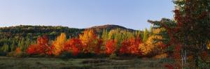 Trees in the Forest, Adirondack Mountains, Essex County, New York State, USA