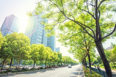 https://imgc.allpostersimages.com/img/posters/trees-lining-the-streets-in-jianggan-new-town-zhejiang-china_u-L-Q12SAZJ0.jpg?p=0