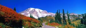 Trees on a Hill, Mt Rainier, Mount Rainier National Park, Pierce County, Washington State, USA