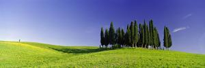 Trees on a Landscape, Val D'Orcia, Siena Province, Tuscany, Italy