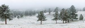 Trees on a snow covered landscape along Trail Ridge Road, Estes Park, Rocky Mountain National Pa...