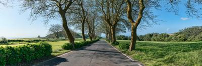 Trees on both sides of road, Sao Miguel Island, Azores, Portugal
