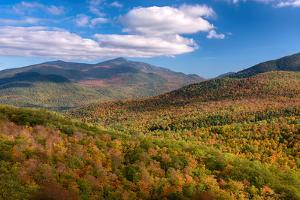 Trees on Giant Mountain From Owls Head, Adirondack Mountains State Park, New York State, USA