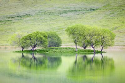 https://imgc.allpostersimages.com/img/posters/trees-on-island-reflect-in-black-butte-reservoir-california-usa_u-L-PXR8V60.jpg?p=0