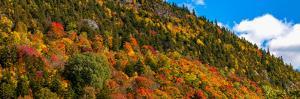 Trees on mountain during autumn, Potton, Quebec, Canada