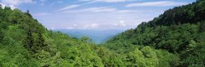 Trees on Mountains, Great Smoky Mountains National Park, Tennessee, USA