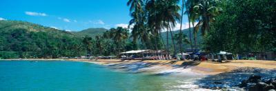 Trees on the Beach, Arapito Beach, Mochima National Park, Anzoategui State-Sucre State, Venezuela