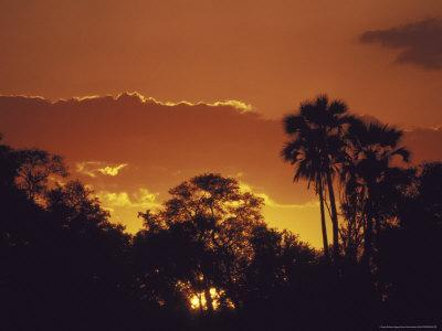 https://imgc.allpostersimages.com/img/posters/trees-silhouetted-against-the-botswana-sunset_u-L-P580TO0.jpg?artPerspective=n