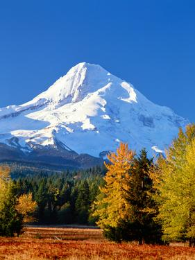 Trees with snowcapped mountain range in the background, Mt Hood, Upper Hood River Valley, Hood R...