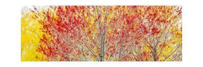 https://imgc.allpostersimages.com/img/posters/trees_u-L-Q1CAMWU0.jpg?artPerspective=n