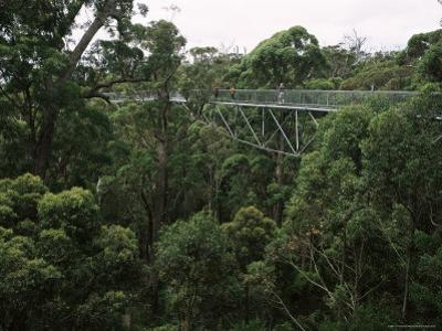 Treetop Walk, Valley of the Giants, Walpole, Western Australia, Australia by G Richardson