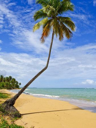 https://imgc.allpostersimages.com/img/posters/tres-palmitas-beach-puerto-rico-west-indies-caribbean-central-america_u-L-P91OFZ0.jpg?p=0
