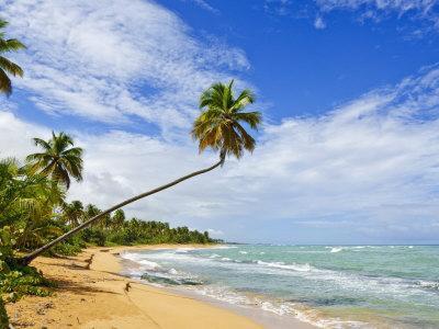 https://imgc.allpostersimages.com/img/posters/tres-palmitas-beach-puerto-rico-west-indies-caribbean-central-america_u-L-P91OGV0.jpg?p=0