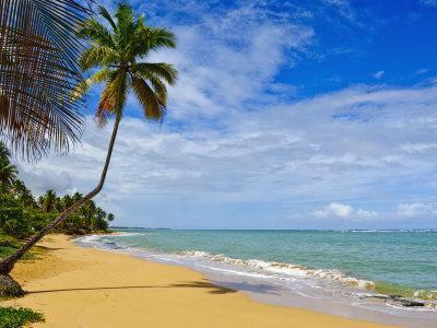 https://imgc.allpostersimages.com/img/posters/tres-palmitas-beach-puerto-rico-west-indies-caribbean-central-america_u-L-P91OIN0.jpg?p=0