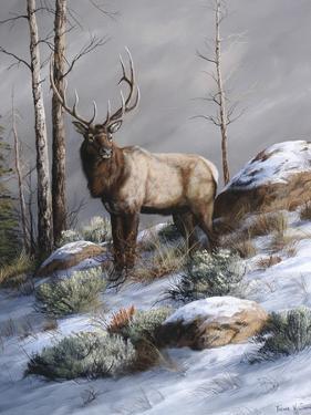 Cold Ridge Watcher by Trevor V. Swanson