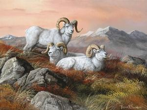 Denali Trio by Trevor V. Swanson