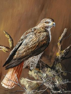 Ponderosa Hunter by Trevor V. Swanson