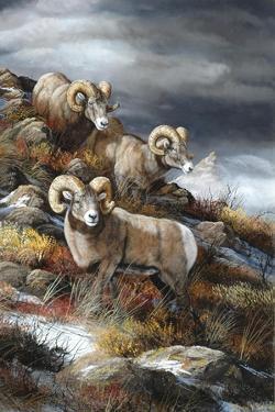Rocky Mountain Kings by Trevor V. Swanson