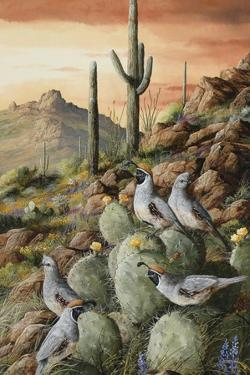 Sunset in Sonora by Trevor V. Swanson