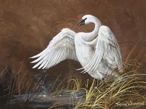 Swan by Trevor V. Swanson