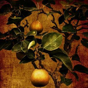 A Bonsai Pear Tree with Two Fruit Against a Rich, Gold Craquelure Background by Trigger Image