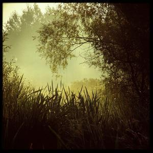 A Misty Scene across Reeds by Trigger Image