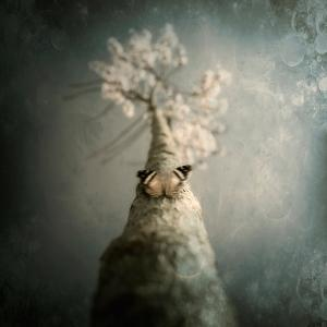 A Small Butterfly Sitting on a Tree with Overlaid Textures by Trigger Image